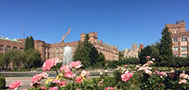 roses and Drumheller fountain on a sunny day