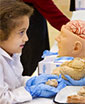 pre-k student holds sheep brain, compares to human brain