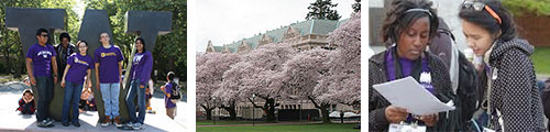 students on campus, cherry trees in bloom