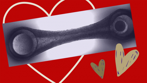 a still photo of a beating heart tissue against a red background with illustrated hearts