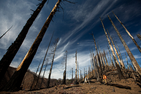 Two researchers standing in the midst of trees devastated by wildfire
