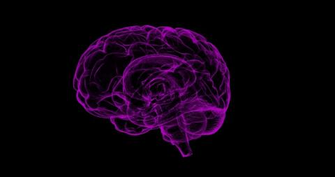 stylized image of the human brain